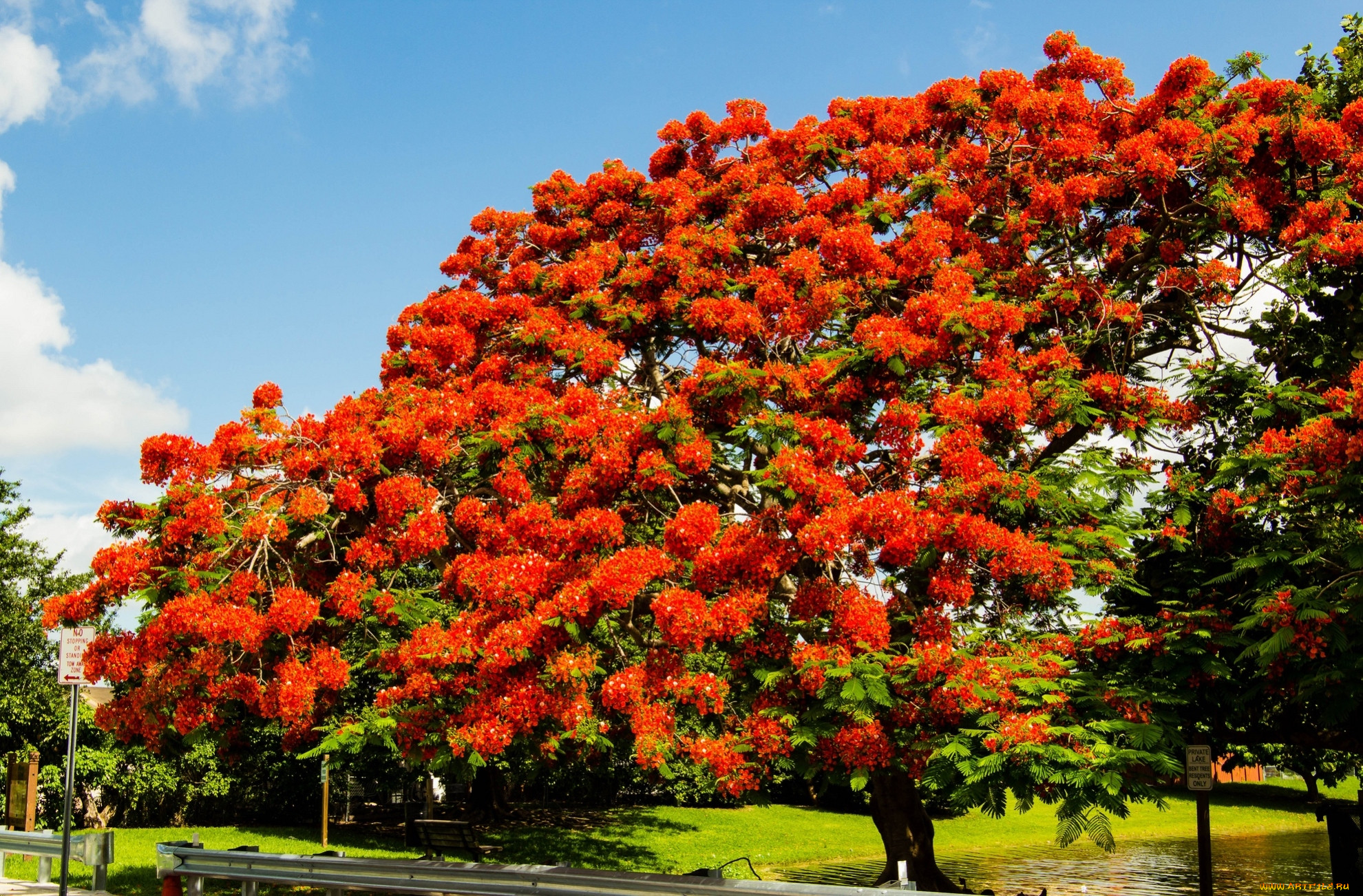 картинки деревьев с названиями и цветами футбол